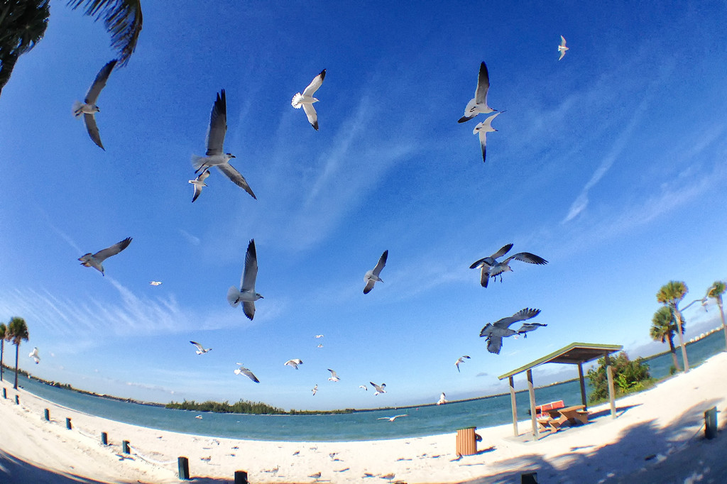A flock of seagulls attack during the workshop I was teaching.